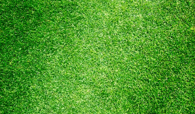 Grass background golf courses green lawn pattern textured