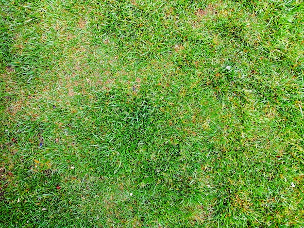 Grass background texture