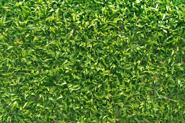 Фон травы
