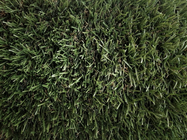 Grass bottom seen from above
