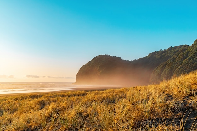 Песчаные дюны, покрытые травой