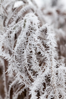 Grass covered with frost and snow in winter