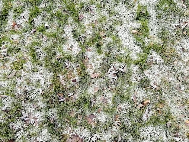 霜で覆われた草上面図のクローズアップ