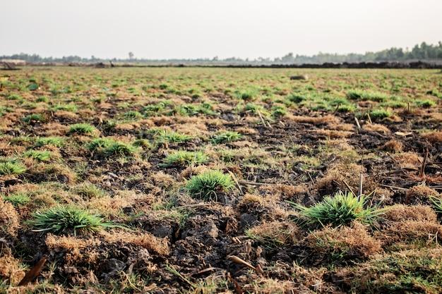 Grass on dry land.