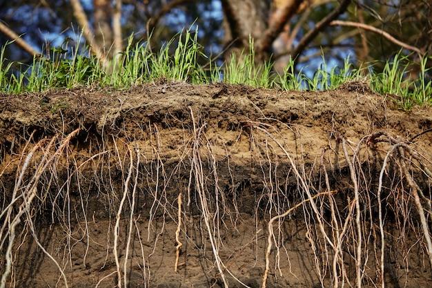 Земля и корни травы. зеленая трава с пересеченной землей.