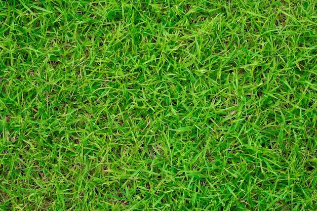 芝生のフィールドの背景。緑の草。緑の背景