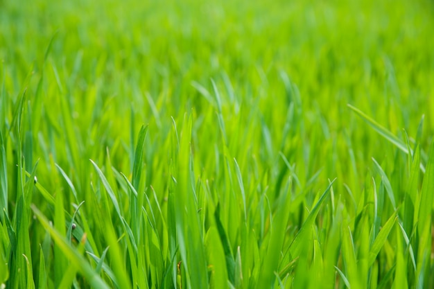 草フィールドのクローズアップ