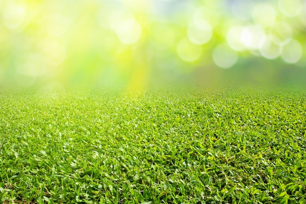 Grass field on nature spring season background texture