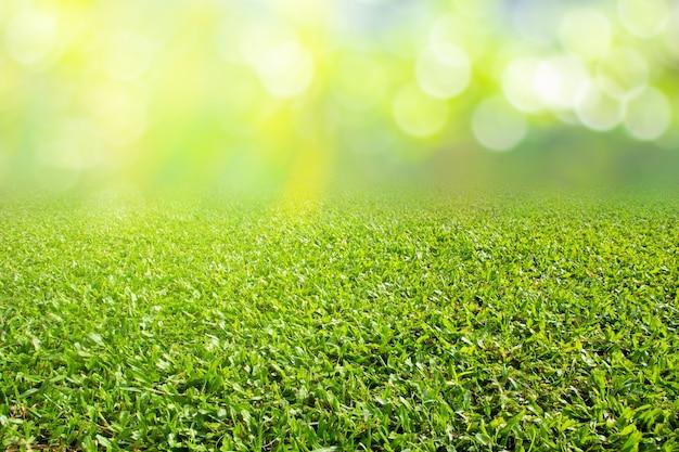 自然の春の季節の背景テクスチャの芝生のフィールド