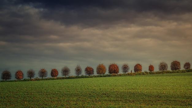 暗い雲の下の芝生のフィールド