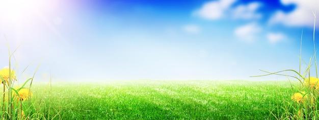 Поле цветов травы весной фон с солнечным светом