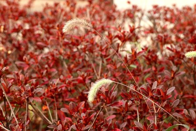 Grass flower in korea