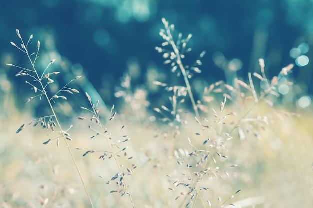Grass flower at moning sunrise ,vintage filter effect