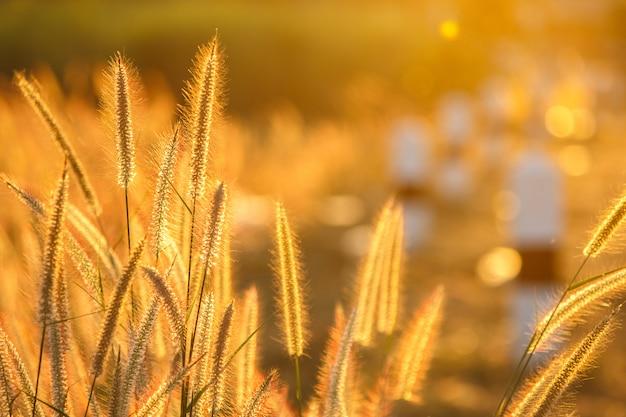 잔디 꽃 프리미엄 사진