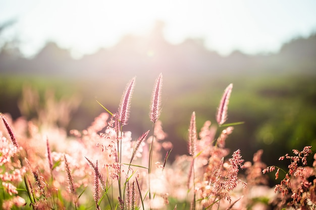 Grass flowers in the morning