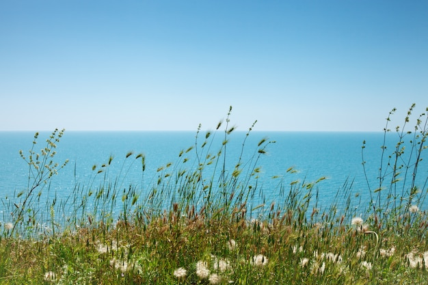 Grass and flowers on sea