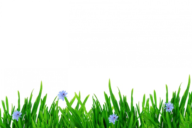 Grass flowers spring summer border isolated on white background