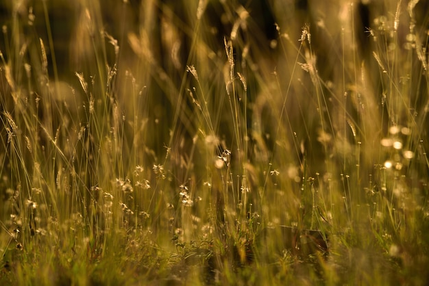 Grass flowers on sunset yellow background