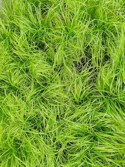 植物店の猫用草