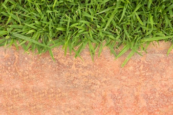 Grass frame on orange concrete