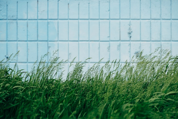 Grass grow on wall of blue rectangle tiles close up.
