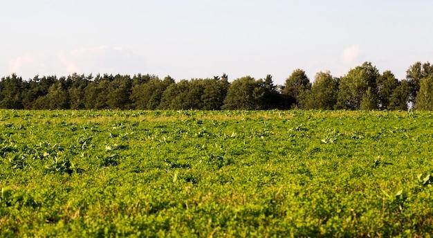 夏の牧草地で育つ草、風景