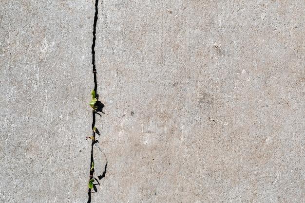 Трава прорастает сквозь трещины на бетонной дорожке