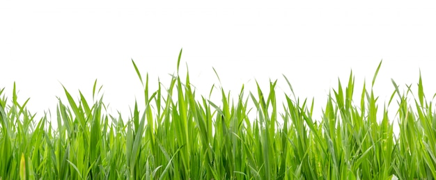 Grass in high definition isolated on white