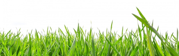 Grass in high definition isolated