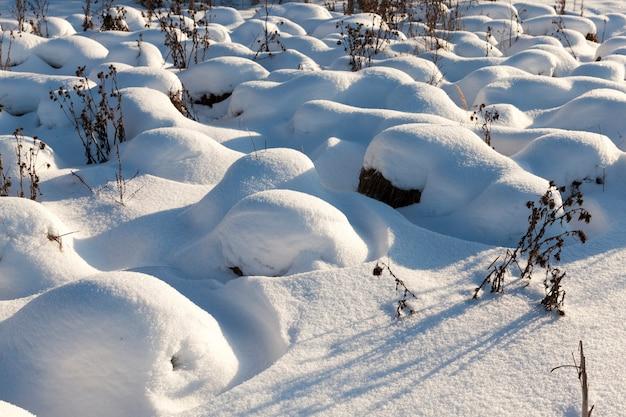 降雪や吹雪の後の大きな漂流の草、寒い天候と雪の形での降水量の多い冬の季節は草や乾燥した植物を覆います