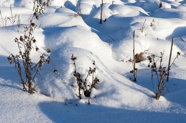 Трава в больших сугробах после снегопадов и метелей, в зимний период с холодами и большим количеством осадков в виде снега покрывают траву и засохшие растения.