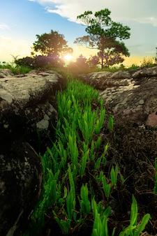 바위 균열 일몰에 잔디