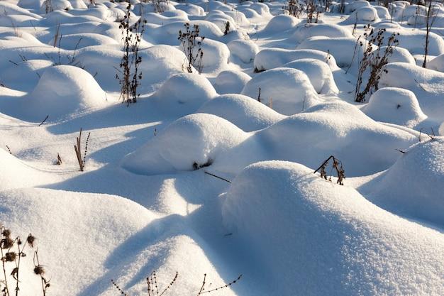 雪の中の草