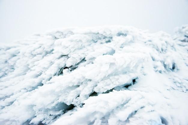 青い氷と雪の中の草。冬のマクロ撮影
