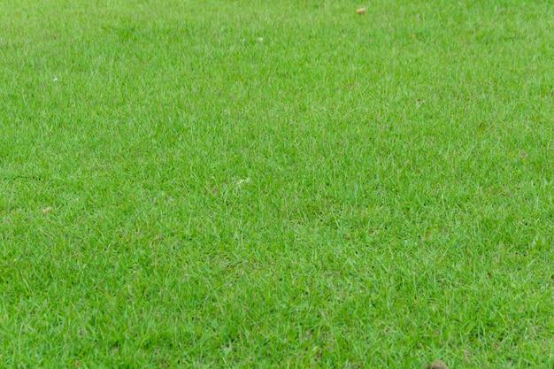 裏庭として庭の芝生。