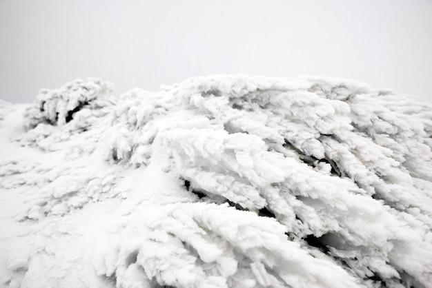 氷と雪の中の草。冬のマクロ画像