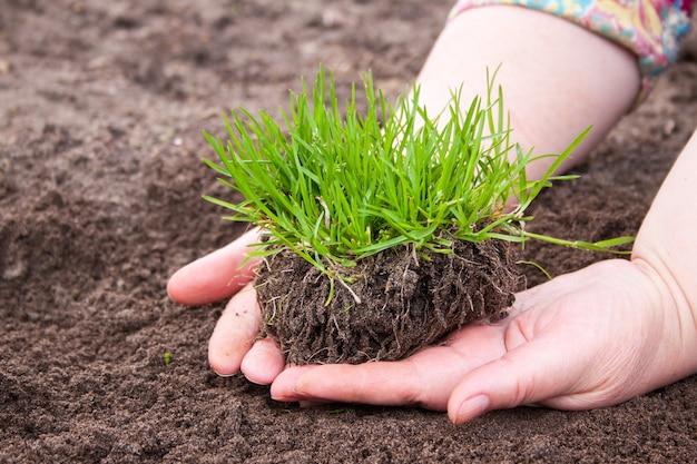 Трава в руках женщины, концепция охраны природы