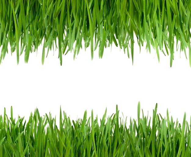 잔디 흰색 배경에 고립입니다.