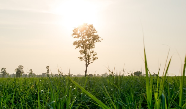 Grass in light and lonely tree nature landscape .