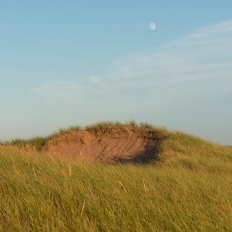 Трава на холме, северный рустико, остров принца эдуарда, канада