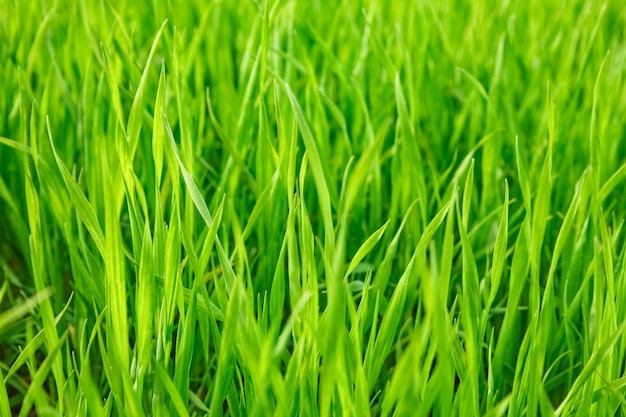 공원 배경에서 자연에 잔디