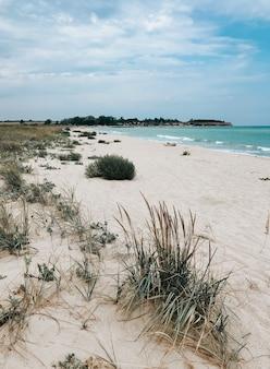 白い砂浜の草海の青いアクアマリンの波のライン。ソフトウェーブオーシャンフォーム。自然な背景