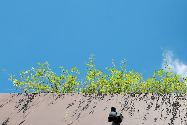 Grass shrub and a cement terrace under blue sky for background design