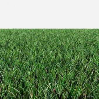 Grass skyless