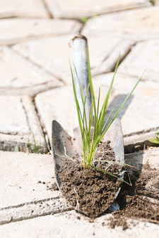 Grass sprout with ground on a small shovel. work in the garden.