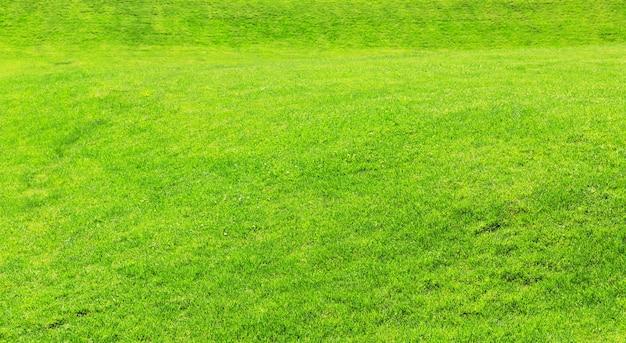 草のテクスチャ背景