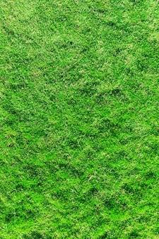 Текстура травы из поля