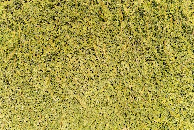 Grass textured background
