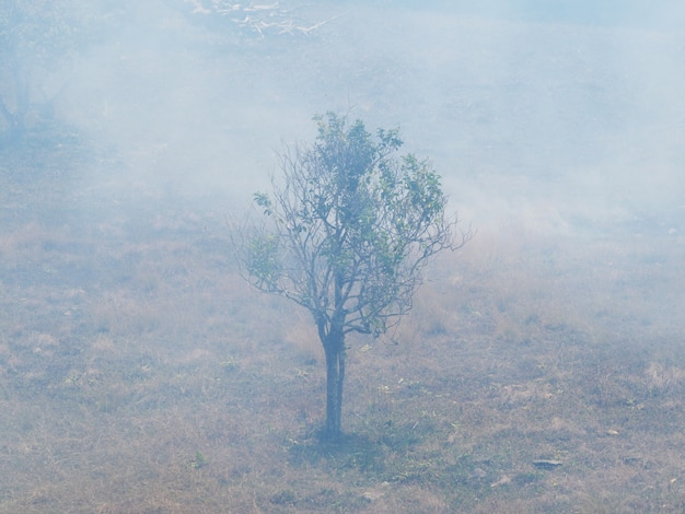 Grass and tree burn