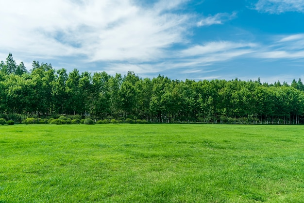 Grass and trees in the park under the blue sky